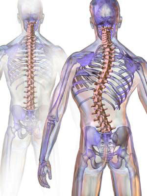 Curvy Spines, Scoliosis and Chiropractic