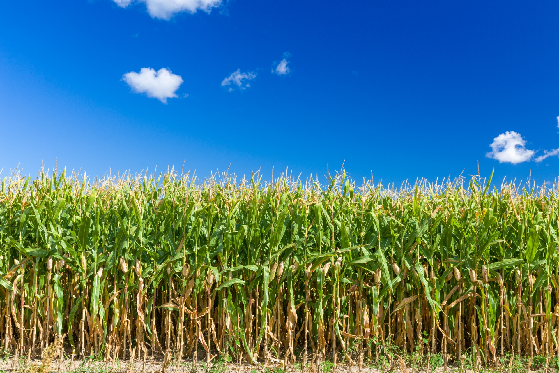 Plant Corn, Reap Milo: The Principles of Sowing and Reaping in Chiropractic