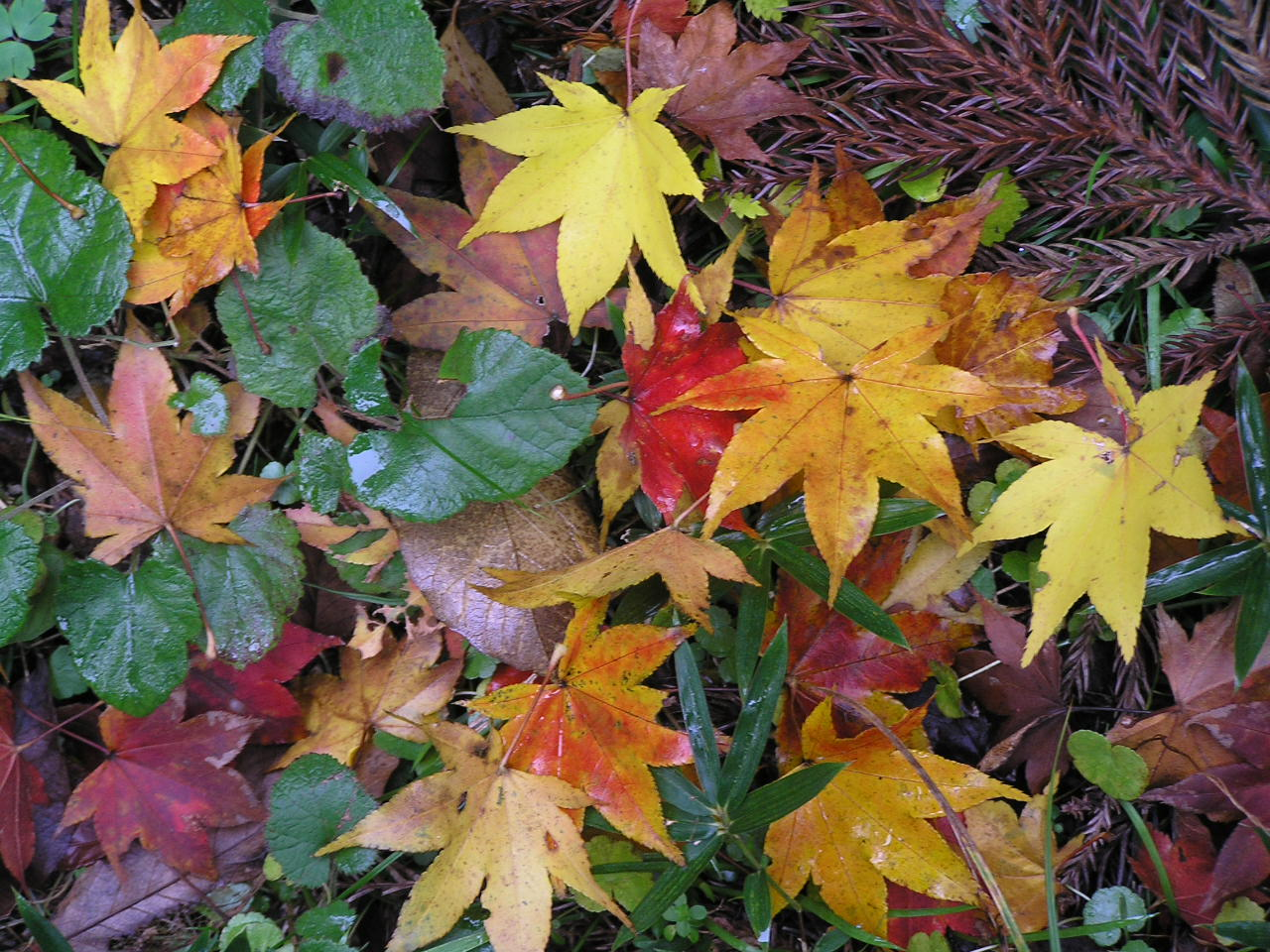 Unhealthy & Losing Your Leaves? Chiropractic Can Change Your Season